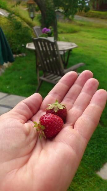 Mmmm fantastiskt gott med jordgubbar.. .nästan ända in i september